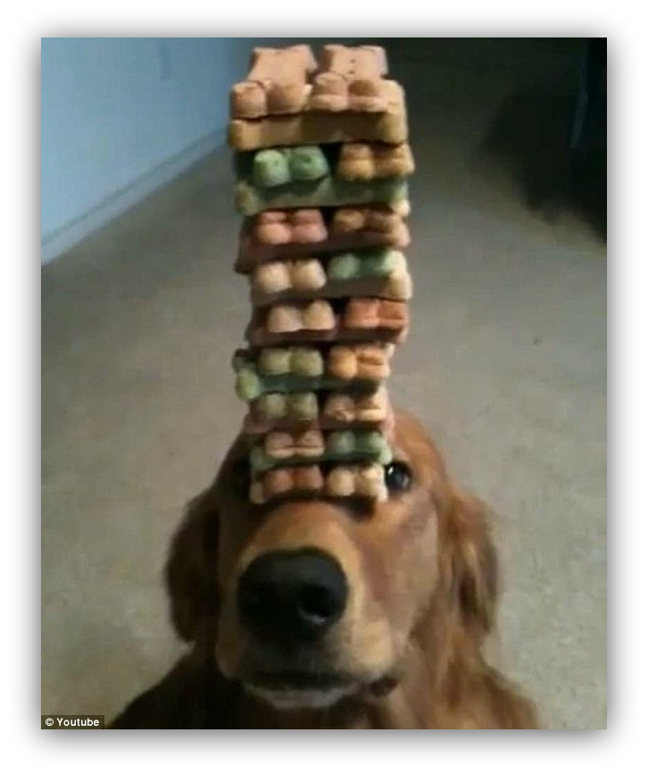 Photo of a doggo holding a whole bunch of treats on his snoot
