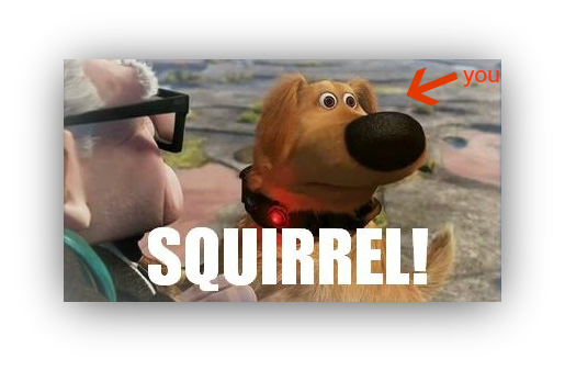 Screenshot of squirrel from up
